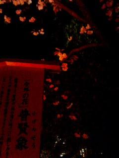 造幣局の桜。