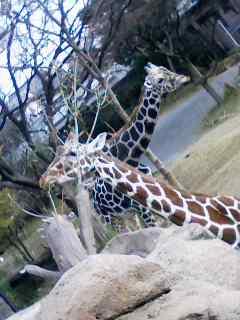 動物園へ。